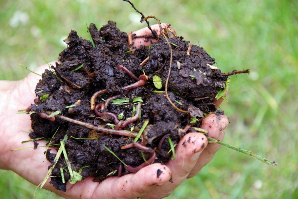 Compost avec de la terre et des vers de terre